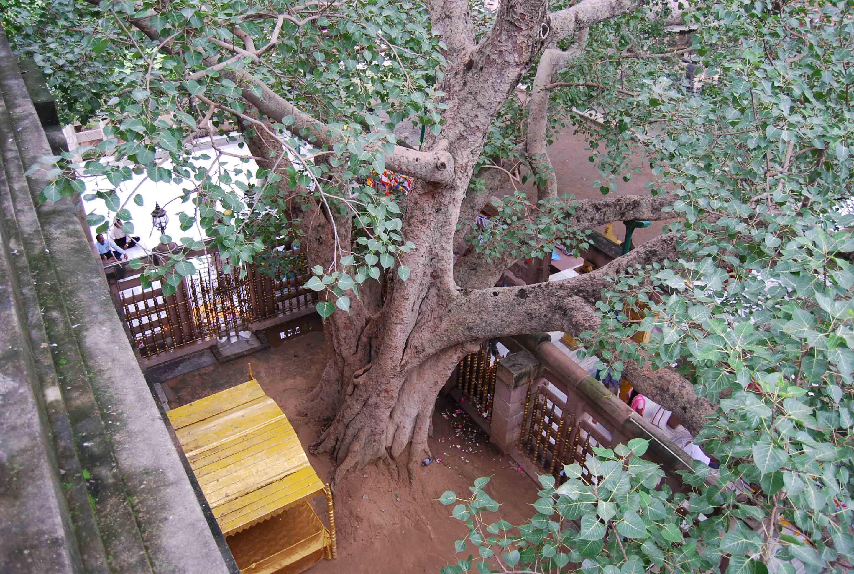 Tòa Kim Cang ở giữa cây Bồ Đề và đền Bồ Đề - Vajrasana [ Diamond Throne ] between Bodhi tree and Mahabodhi temple